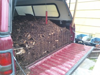 Poplar Wood Chips